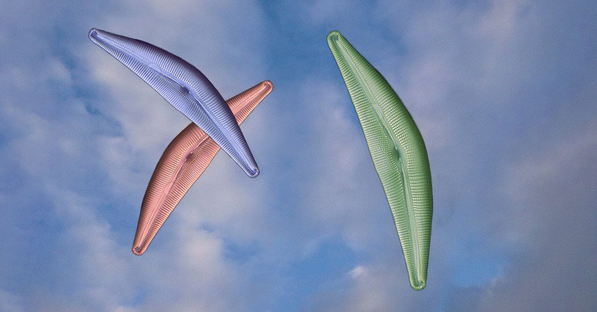 Tierra de diatomeas para consumo humano y usos